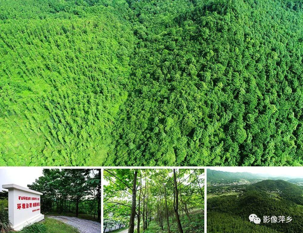 """【热点图传】萍乡""""国家森林城市""""有多美?航拍美图告诉图片"""