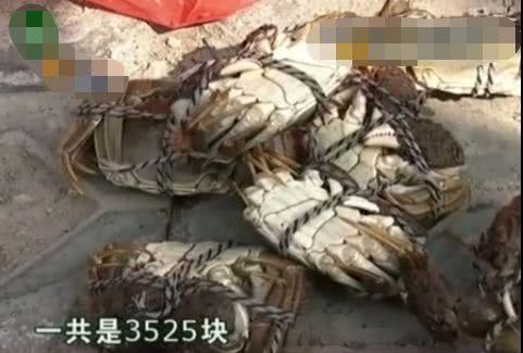 价值3525块的螃蟹被酒店调包,酒店强行狡辩,查看监控真相曝光