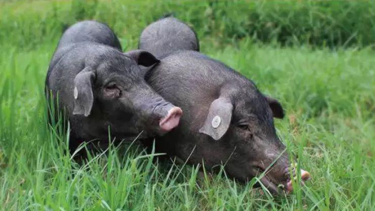 你们这些北方人别再说火腿是火腿肠了! 好物v火腿安徽肉制品工厂图片
