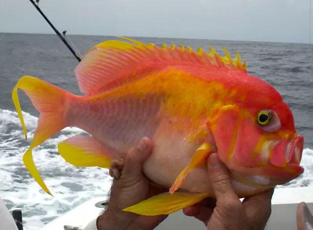 官宣:这些鱼,我一条都钓不到!