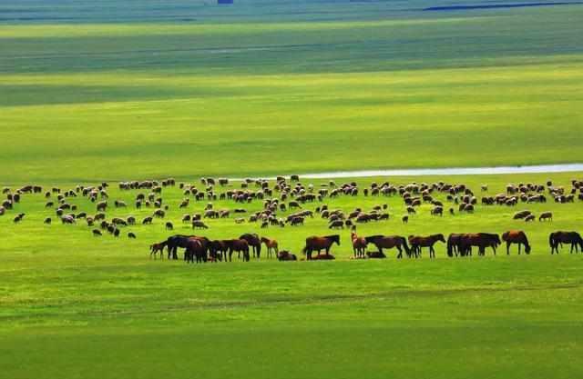中国的草原资源十分丰富: 这四大草原必须要去, 记录着国人的记忆