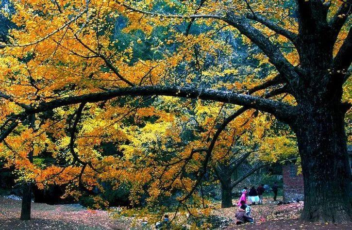 广西最美的秋天即将红遍朋友圈,错过等一年!