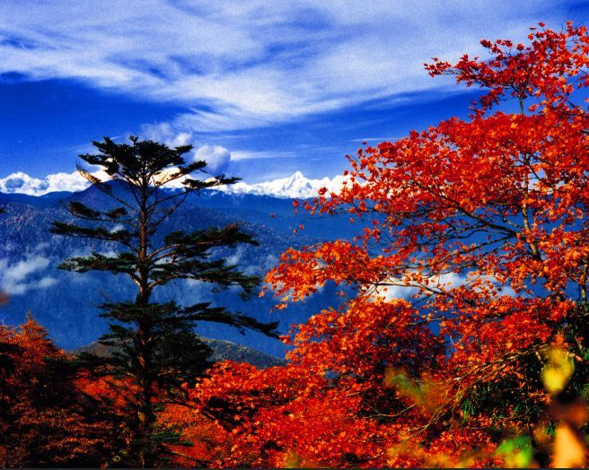 峨眉山一张门票看两季美景