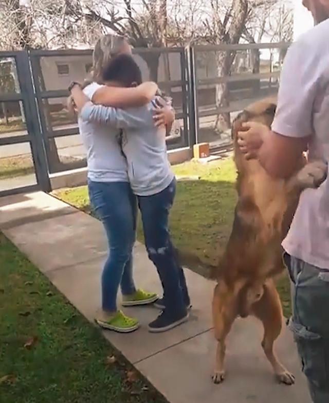 男孩发现走失8个月的狗狗出现在家门前,当场泪崩:你终于回来了