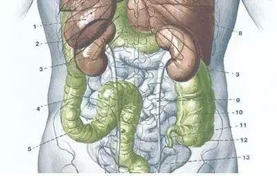 北大外科专家罗成华:哪些人应定期做结肠镜?
