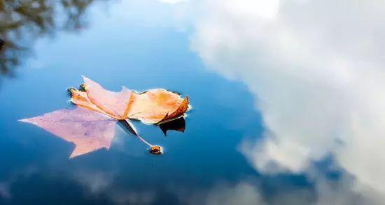 色彩风景天空枫叶水粉画