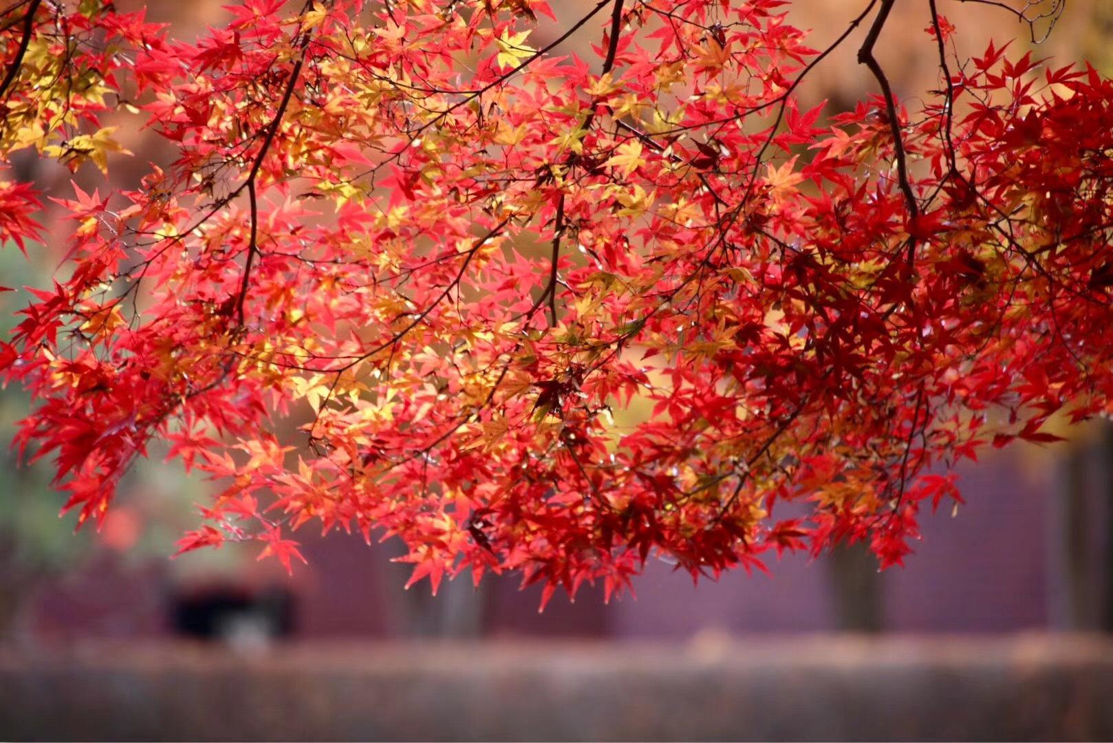 阅尽秋色,却道秋是武汉江夏山色浓!