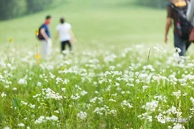 城市周边一般都有很美的郊外田园, 农田,大树,草地和田间小路, 阳光