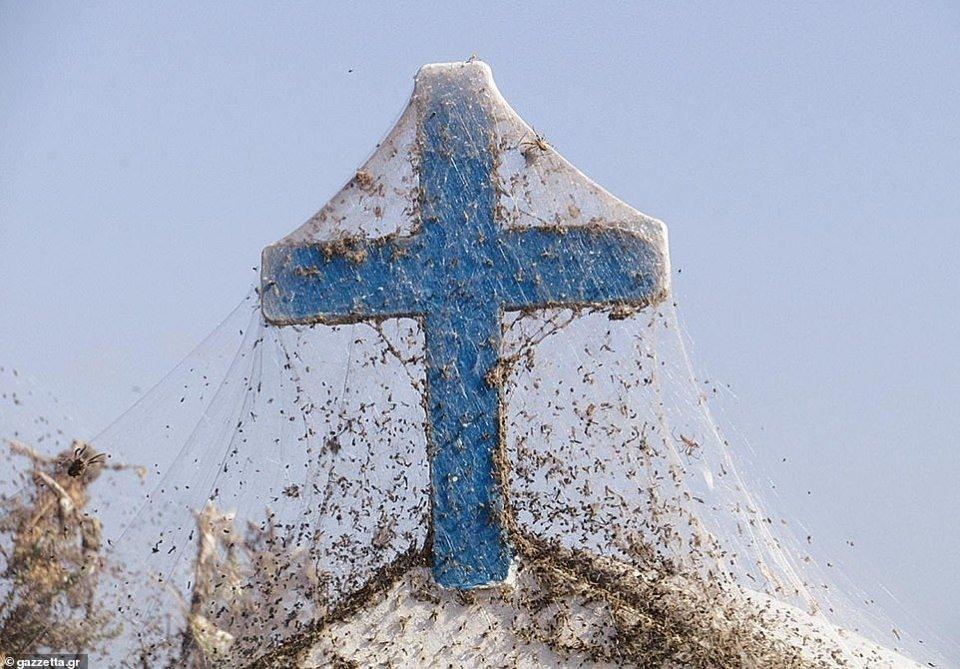 希腊某湖泊周围覆盖一英里长的蛛网,令人毛骨悚然
