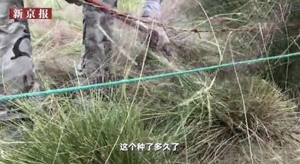神吐槽:美但是三天!好几处网红花海因游客爬行比较严重,迫不得已提早收割 作者: 来源于:神吐槽