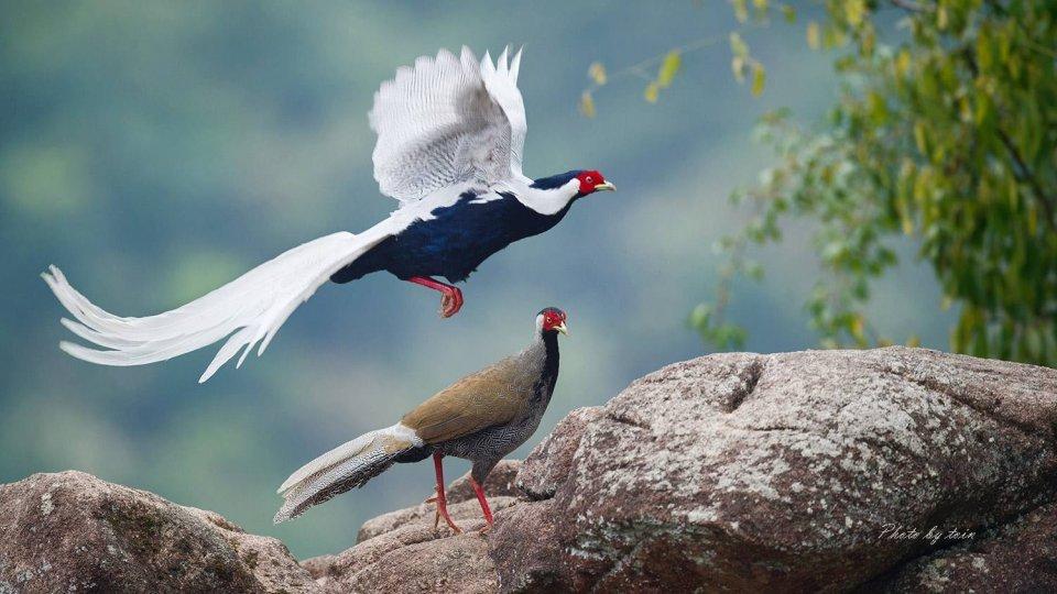 湘西有种鸟洁癖到死,宁愿在树上饿着等雨停,也不愿意下地觅食