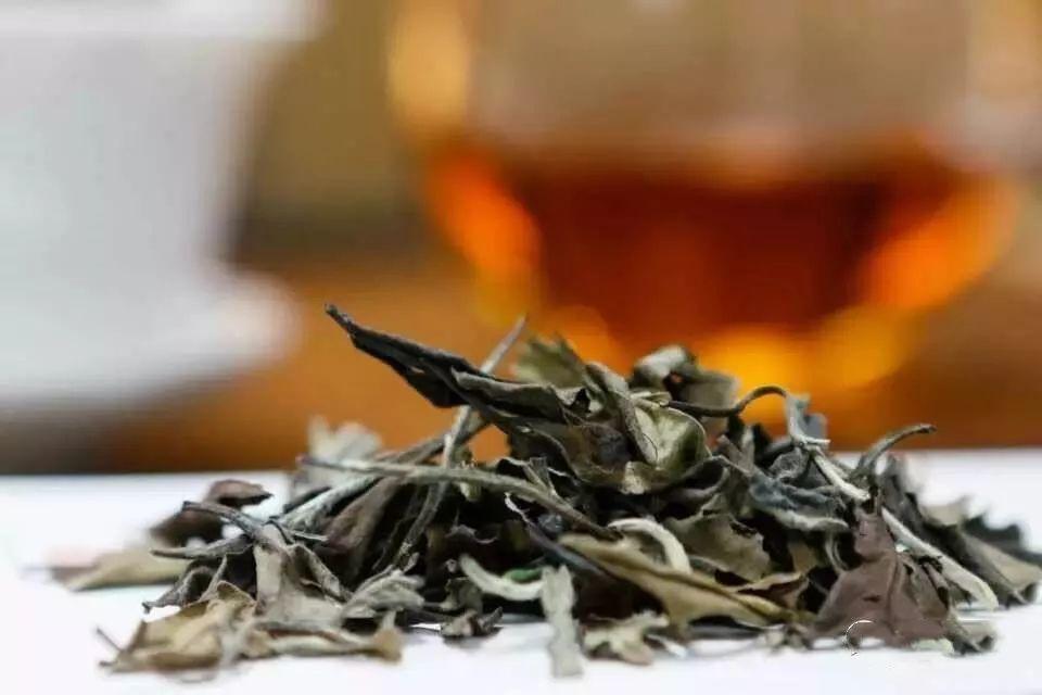 老白茶真的那么好吗