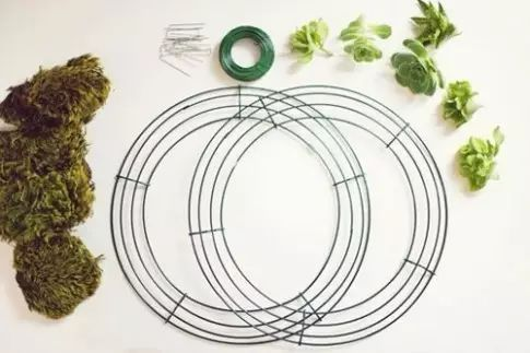 教你DIY做一个多肉植物花环,这才叫美上天!