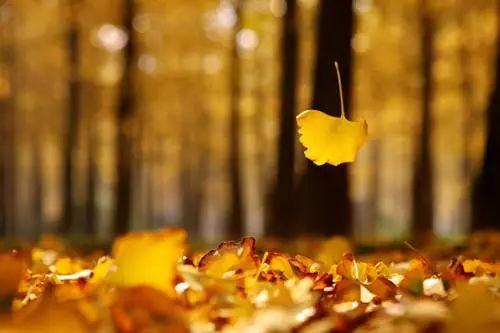 秋日至,秋意浓,又是一年丰收时