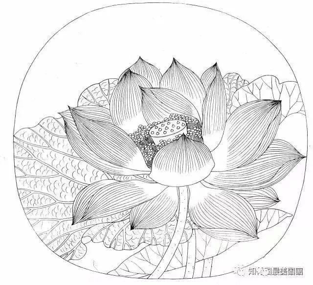 国画工笔花鸟教程—白描基础图片