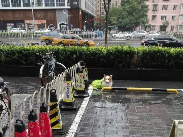 狗狗在门口淋雨等主人,路人小姐姐帮忙打伞遮雨...超暖的一幕!