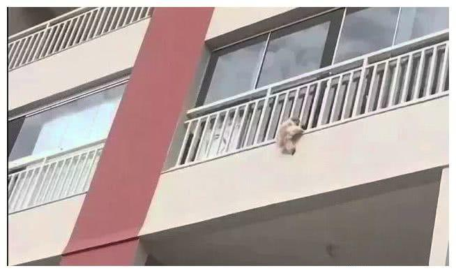 小区几个邻居扯了个大床单,说是狗狗跳楼,要抓紧时间救!