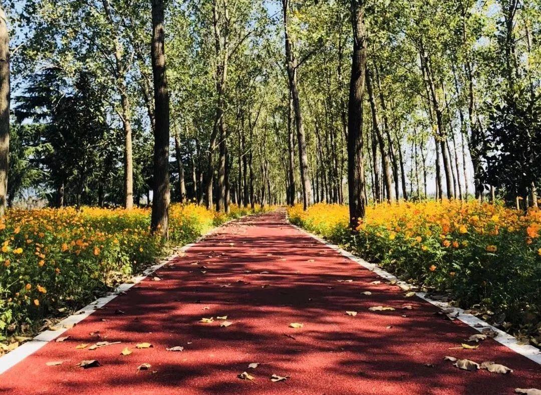 壁纸 风景 森林 桌面 1080_788图片
