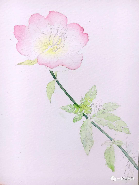 花瓣网水彩手绘叶子
