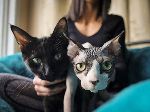 无毛的猫是什么品种图片
