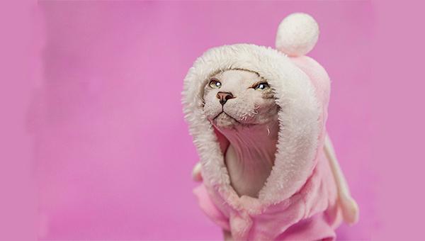 无毛猫好养活吗图片