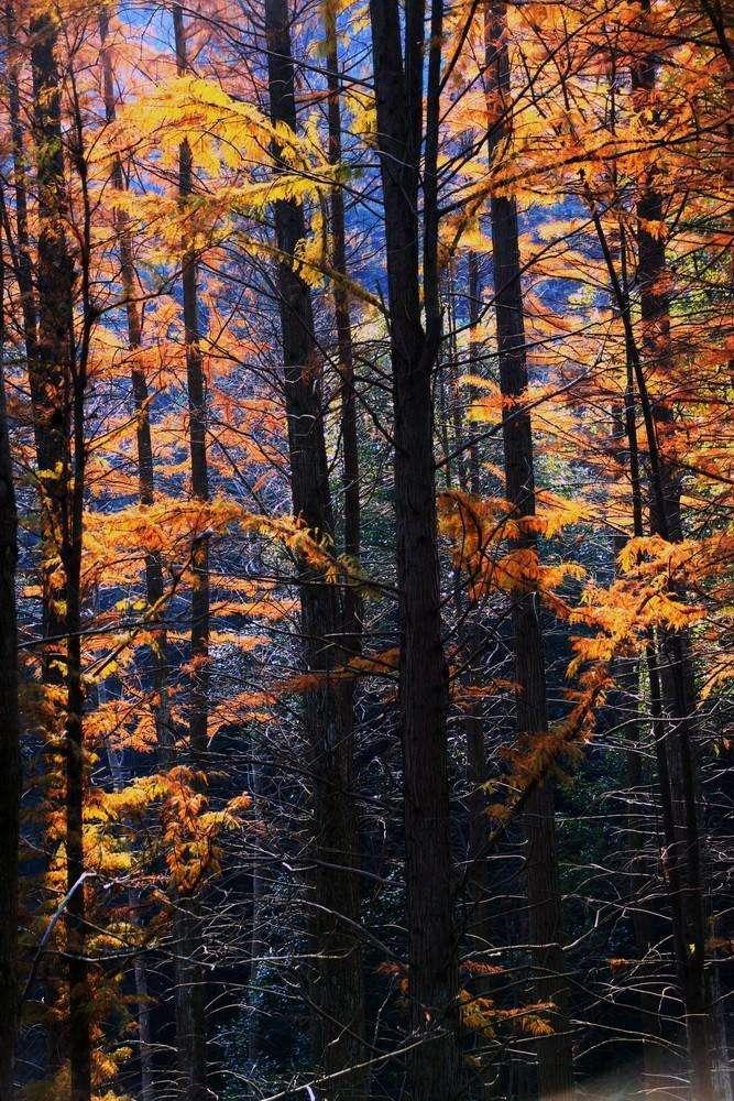 杭州不为人知的秋色秘境,没有人山人海,只有斑斓和静美