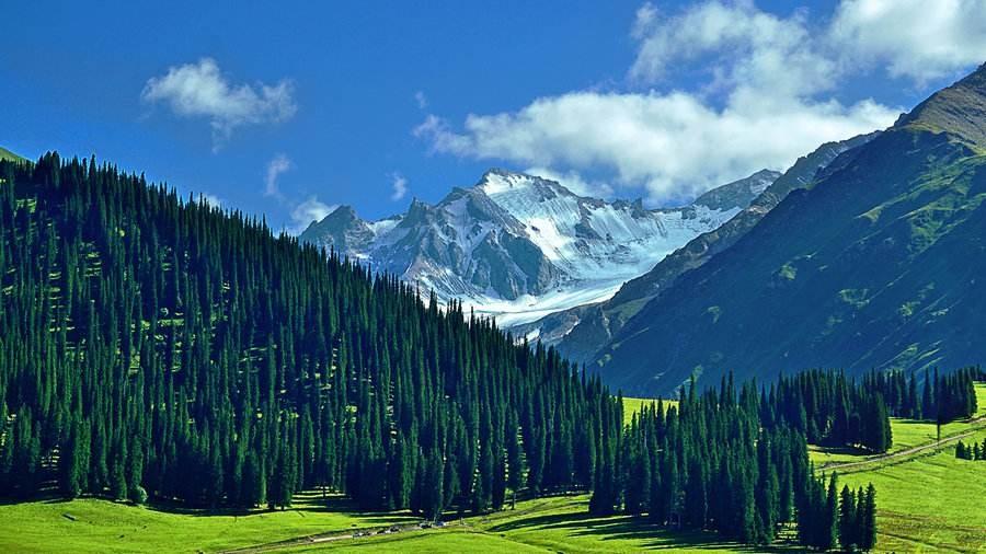 地貌多样性的新疆,不止有荒漠与戈壁,还有绿草如茵的大草原