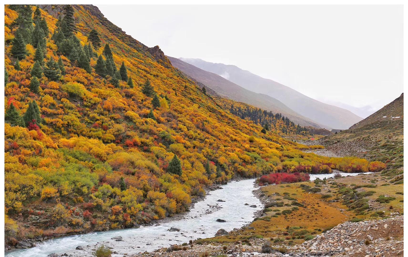 川藏线秋季错峰出行与美食美景有缘,包车拼车住宿也便宜! 川藏线旅游攻略 第8张
