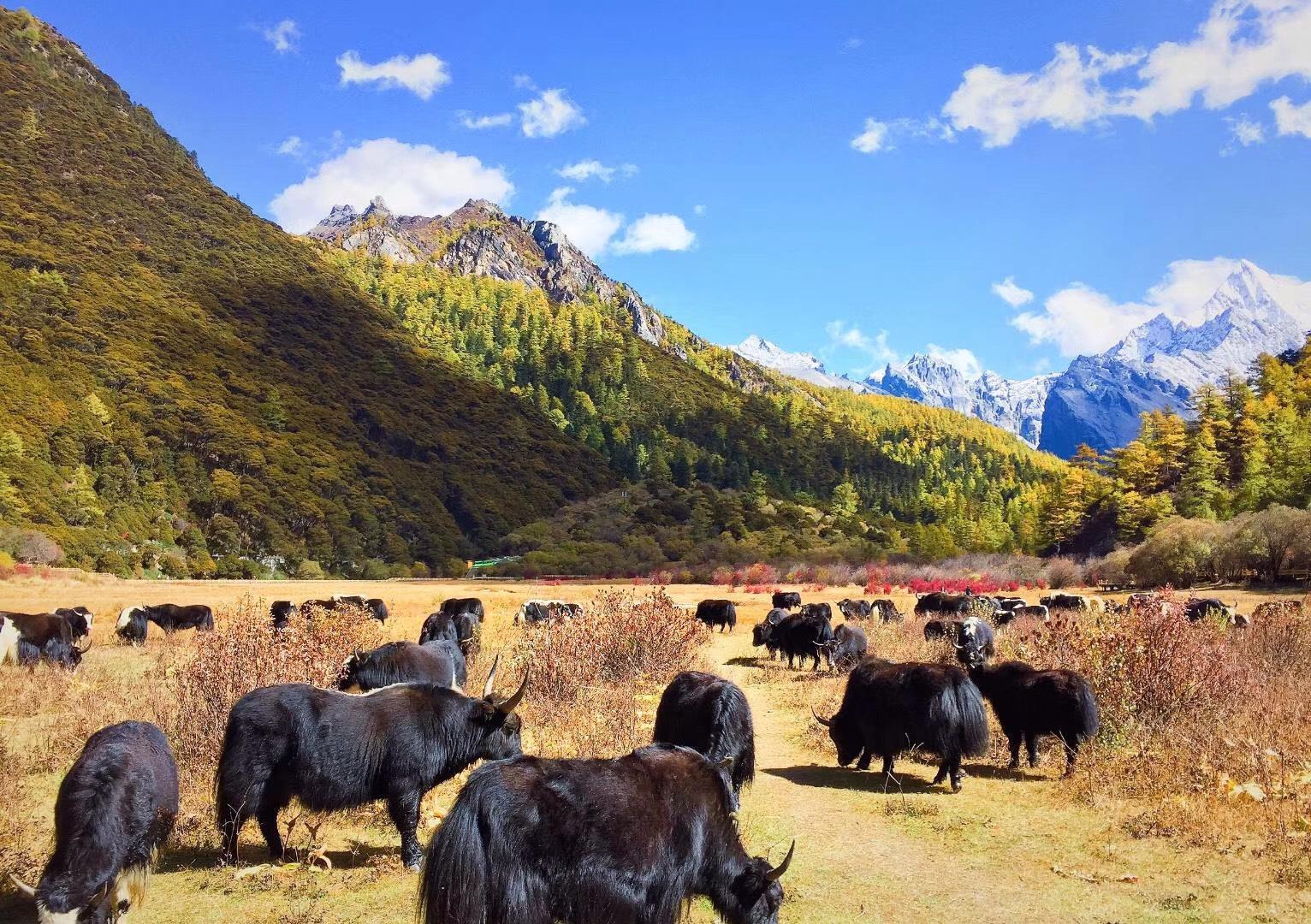 川藏线秋季错峰出行与美食美景有缘,包车拼车住宿也便宜! 川藏线旅游攻略 第4张