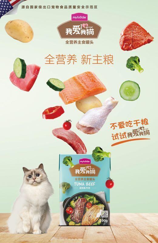 """养猫干货分享:""""铲屎官""""注意了做到这几点很重要!"""