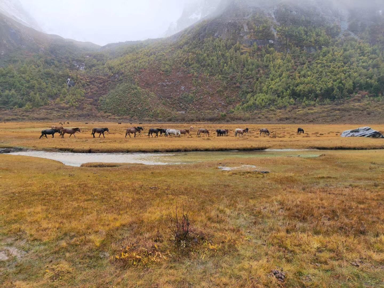 川藏线秋季错峰出行与美食美景有缘,包车拼车住宿也便宜! 川藏线旅游攻略 第12张