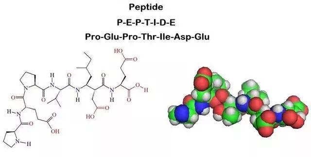 正文  肽,就是peptide, 中文翻译为肽或胜肽,是分子结构介于氨基酸和图片