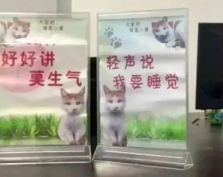 他是新中国第一只公务员猫,除了捉老鼠,竟然还会...