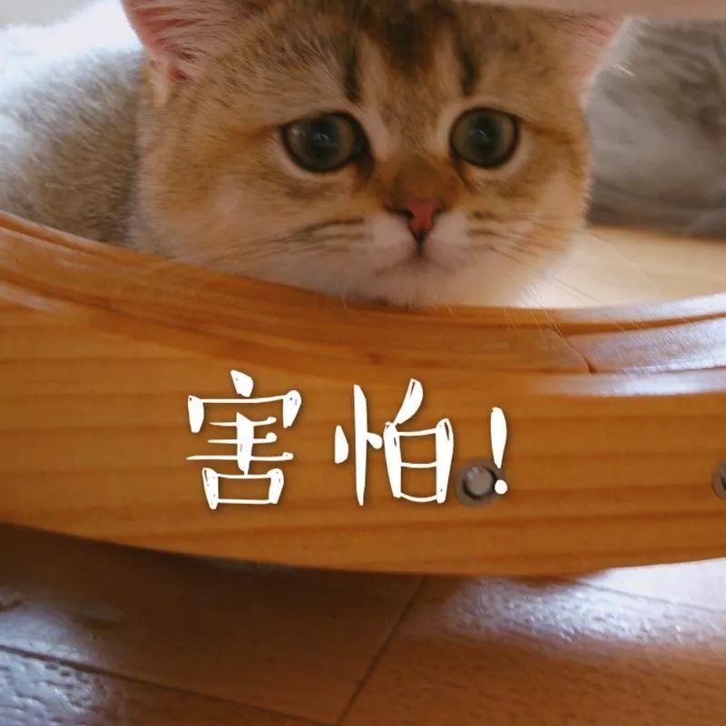 为了收集猫咪的表情包,主人竟然把猫咪.喵:如何才能图片