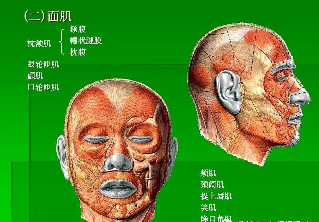 局部解剖--头部