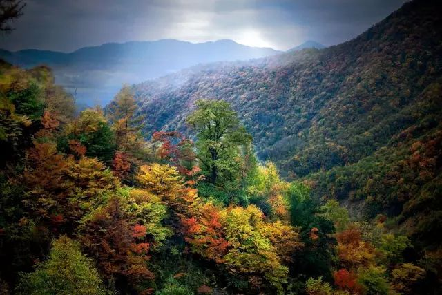 你的回憶里有神農架的秋天嗎?