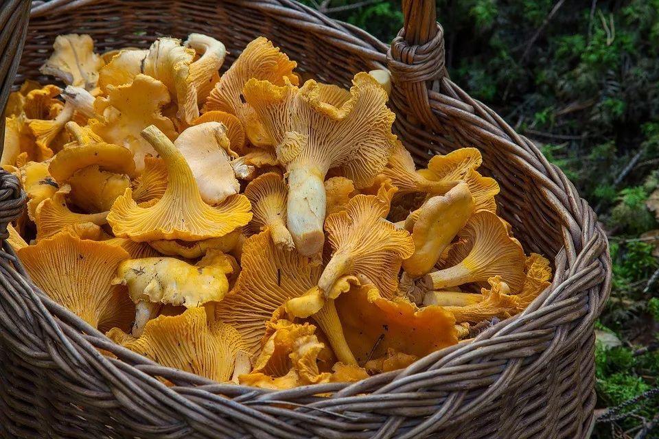 各种菌类的营养全了解,吃对了比药都好使!