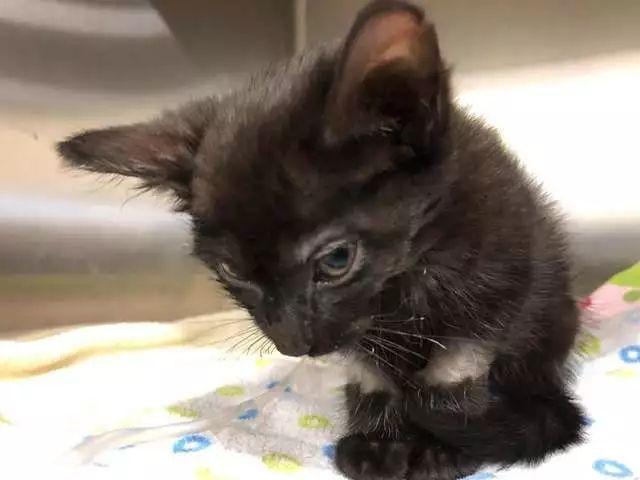 虐待小�_警察在被遗弃的垃圾袋里,发现了一只被虐待濒死的小黑猫!