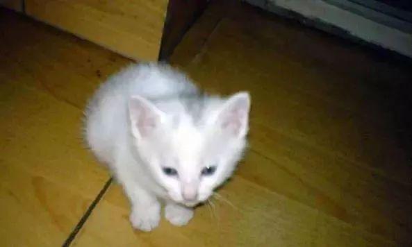 通州这个小区流浪猫屡遭变态虐杀 手段极其残忍 系同一人所为!图片