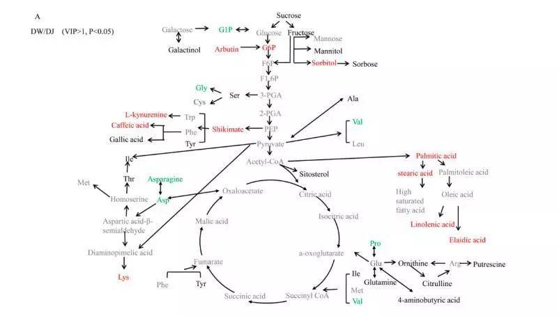 394倍),天冬氨酸(0.385倍)和脯氨酸(0.