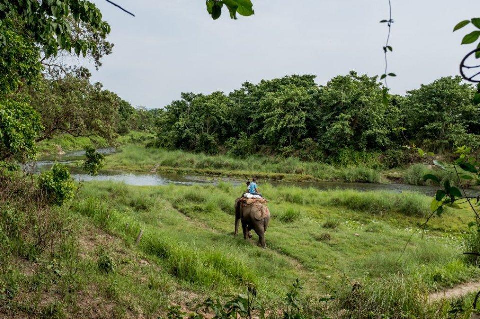 尼泊尔原始森林实拍:大象洗澡的项目跟想象中不一样,大象太可怜