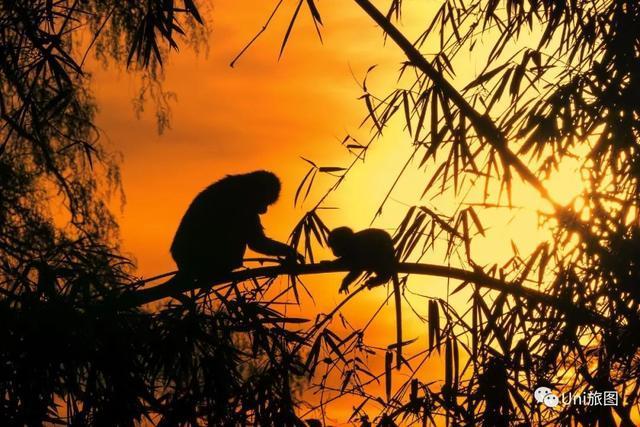 17799《晨光鹿影》 光影我心/摄 沐浴在晨光中的国家一级保护动物