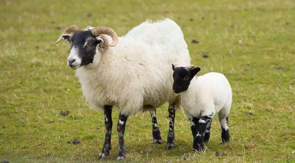 老乡别慌,抓住那只羊,今年A股的第一杀手