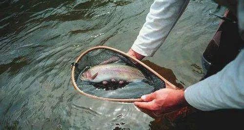 山奈和丁香钓鱼的原理_丁香白芷泡酒钓鱼配方