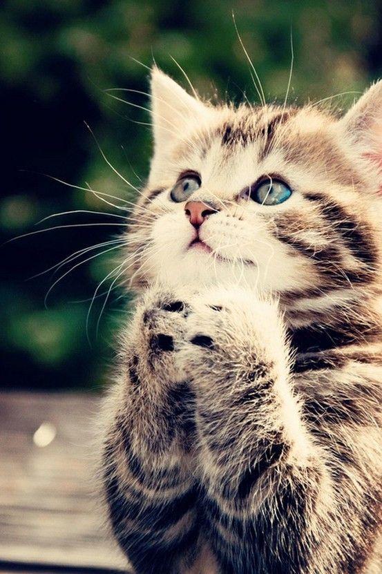 可爱猫壁纸高清图片