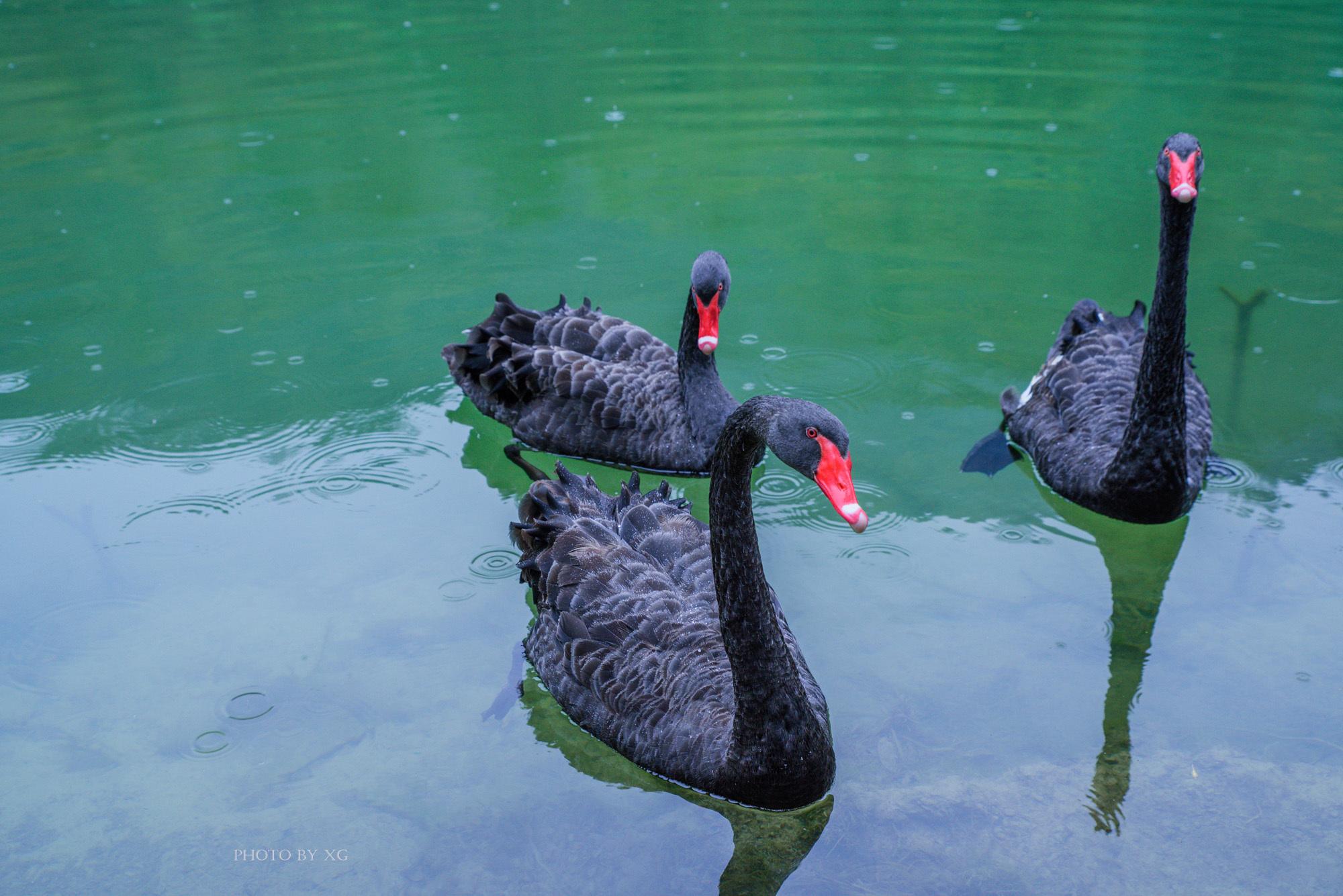 """甘肃有一处洗肺的地方,是真正的绿色天堂,被誉为""""陇上江南"""""""