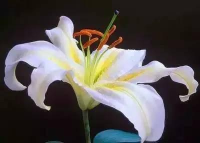 20种花的花语,不仅仅是美。