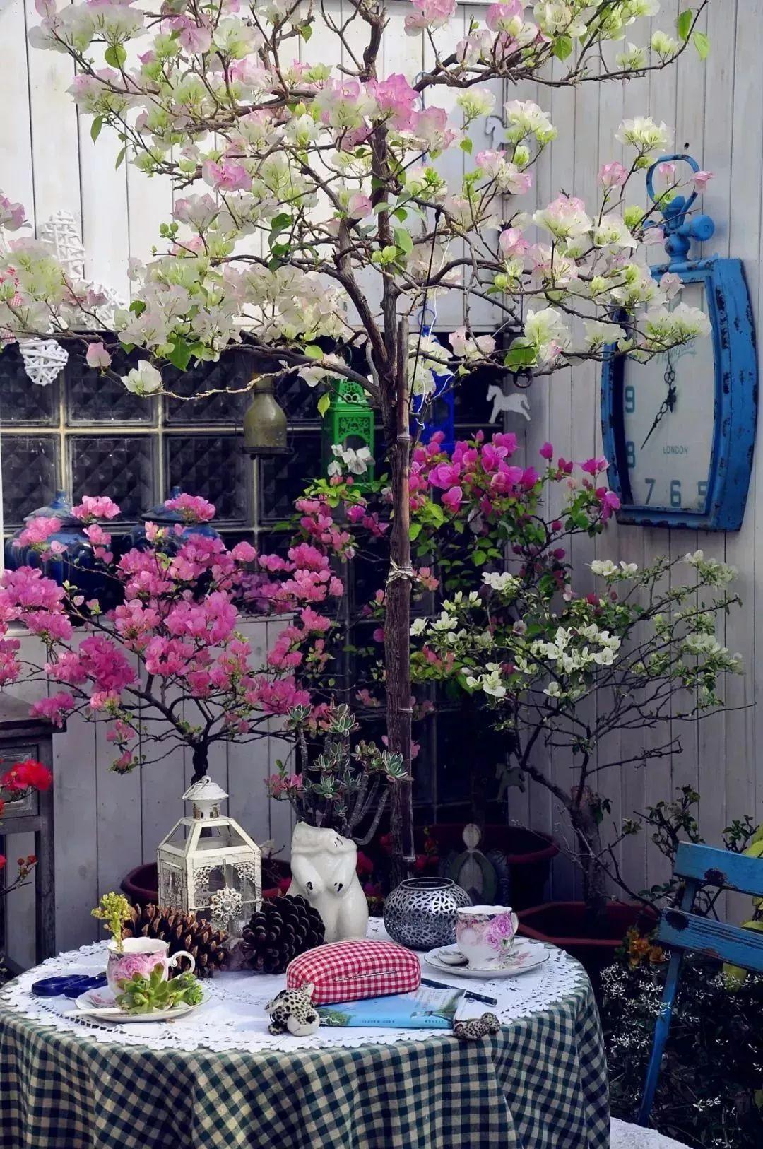 温州鲜切花种植版图扩张 卖花的同时也卖风景