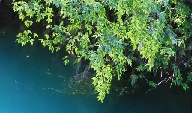旅游 正文  中坝大峡谷位于石泉县境内的汉江南侧,这里地势高峻,水流