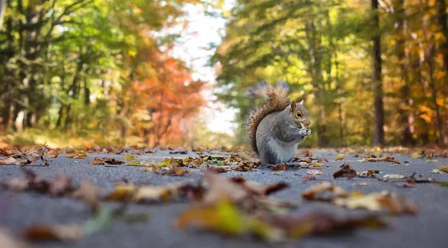 秋天写作必备的好词好诗整理,用上更添意境